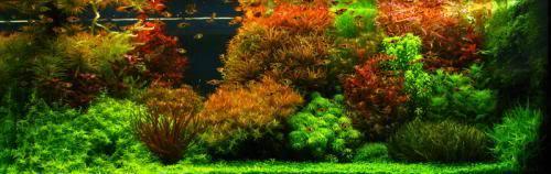 Ducth Aquarium Style