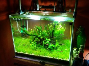 Project Aquascape kedua ku