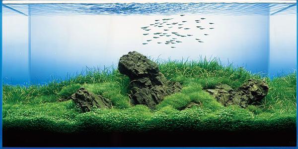 Iwagumi Aquarium Style