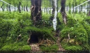 Forest Lair Oleh Tibor Szecsei