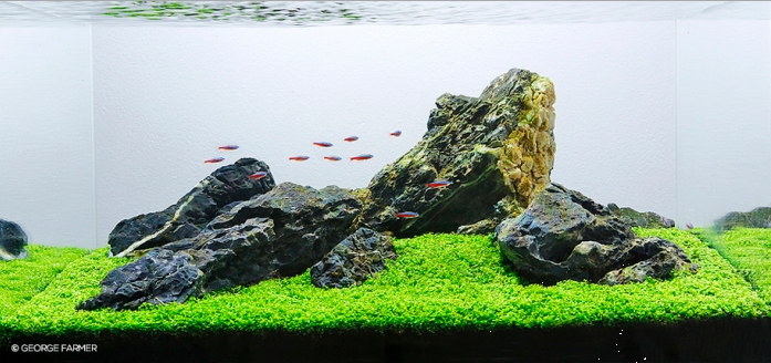 Gaya Aquascape Iwagumi
