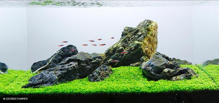 Panduan Membuat Gaya Aquascape Iwagumi