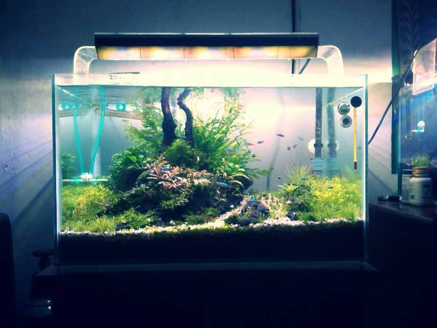 andi aquascape
