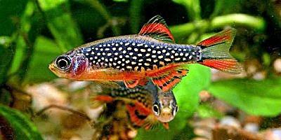 Ikan Untuk Aquascape