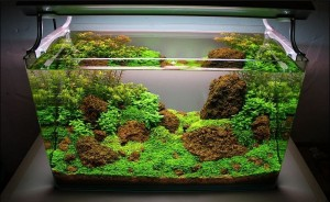 Cara Membuat Aquascape Sederhana - JIGAJIGO.COM