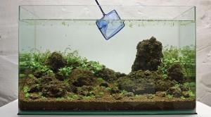 Cara membuat aquascape sederhana 13