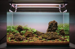 Cara membuat aquascape sederhana 14