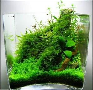 Nano Aquascape dengan Moss