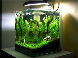 Natural Nano Aquascape
