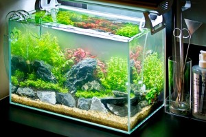 Keindahan Aquascape Mini