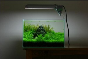 Aquascape Mini yang Sederhana
