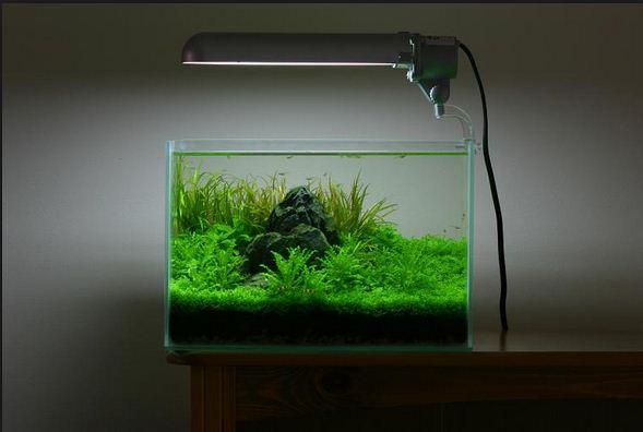 Ide Kreasi Membuat Mini Aquascape | ATAgaleri.net