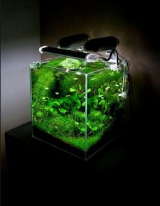 Aquascape Nano yang Simple