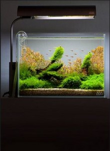 Cara Membuat Aquascape Mini