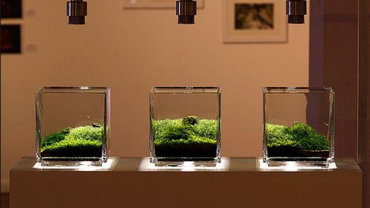 Ide Kreasi Membuat Mini Aquascape Atagaleri Net