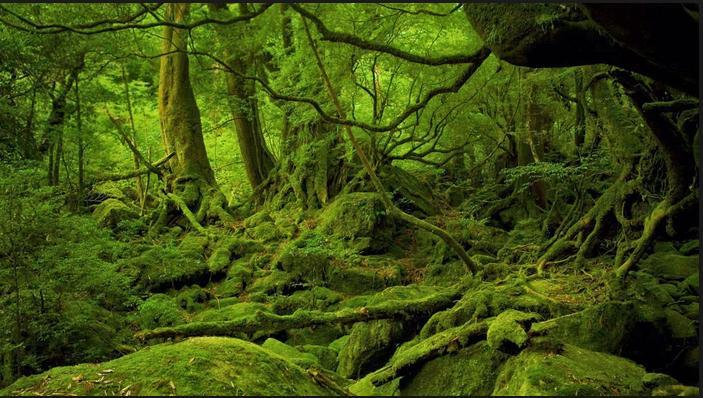 Hutan Yakushima