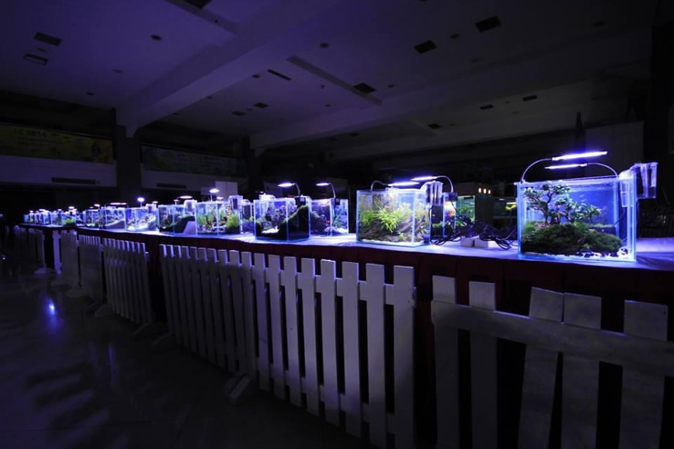 Aquatic Plants Art