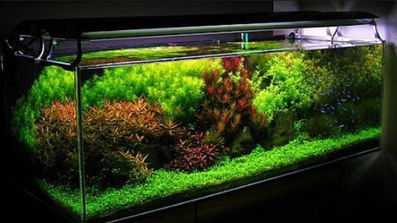 Membuat Aquascape Gaya Belanda Atagaleri Net