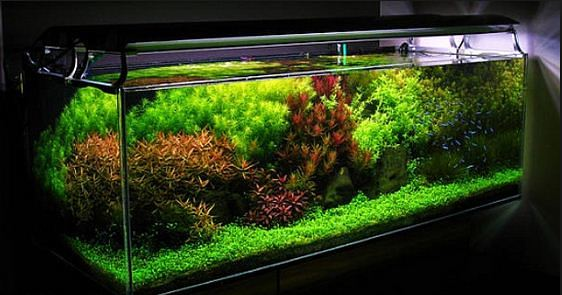 dutch syle aquascape