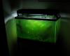 Aquarium Penuh Alga
