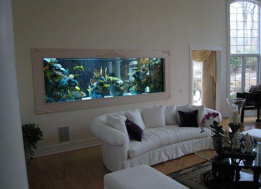 Aquarium didalam dinding