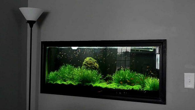 Ide Kreatif Decorsi Aquarium Dinding