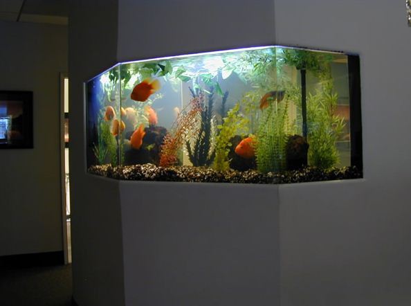Aquarium on wall
