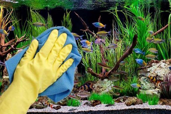Panduan Cara Merawat Aquascape Agar Indah dan Subur ...
