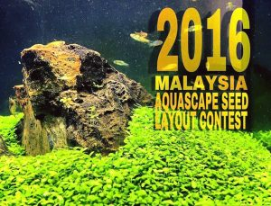 The Malaysia Aquascape Seed Layout Contest