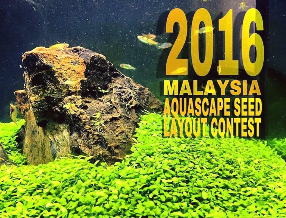 The Malaysia Aquascape Seed Layout Contest | ATAgaleri.net