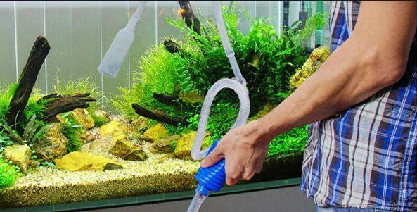 cara merawat tanaman aquascape